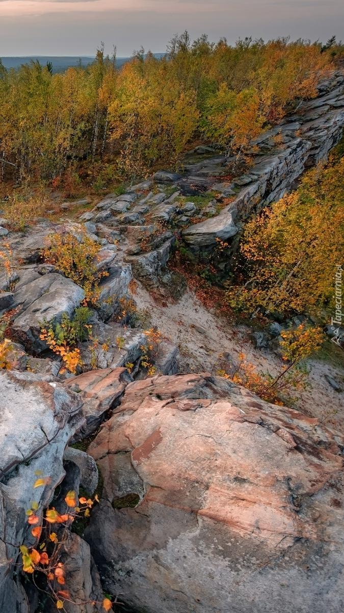Jesienne drzewa na skałach
