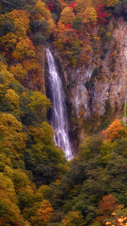 Jesienne drzewa na skałach obok wodospadu