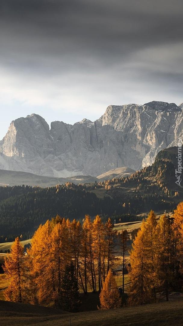 Jesienne drzewa na tle Dolomitów