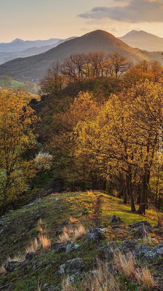 Jesienne drzewa na tle gór