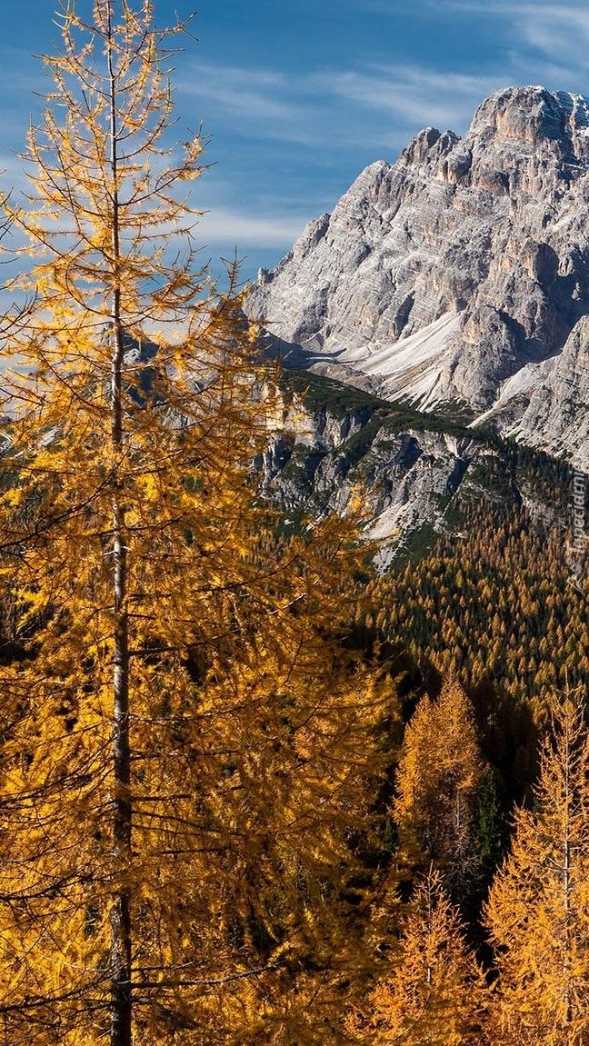Jesienne drzewa na tle skalistych gór