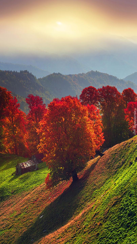 Jesienne drzewa na wzgórzu