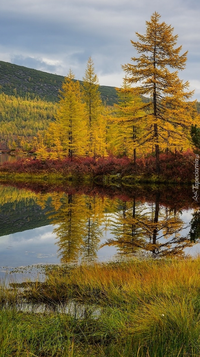 Jesienne drzewa nad brzegiem jeziora