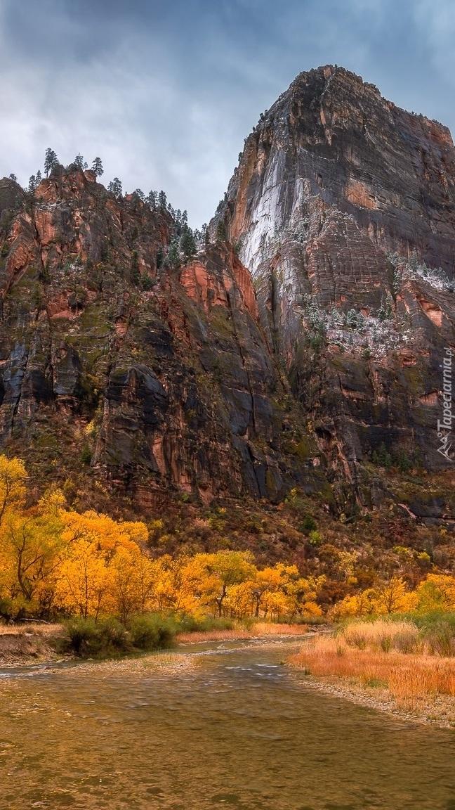 Jesienne drzewa nad górską rzeką