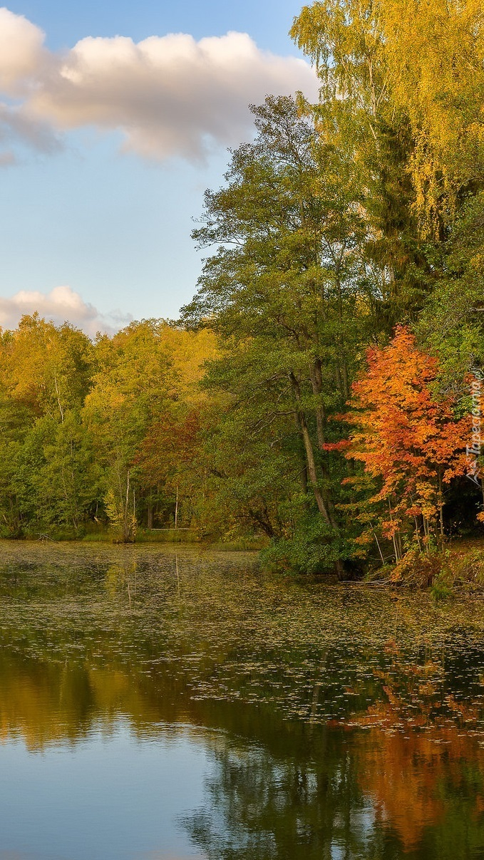 Jesienne drzewa nad jeziorem