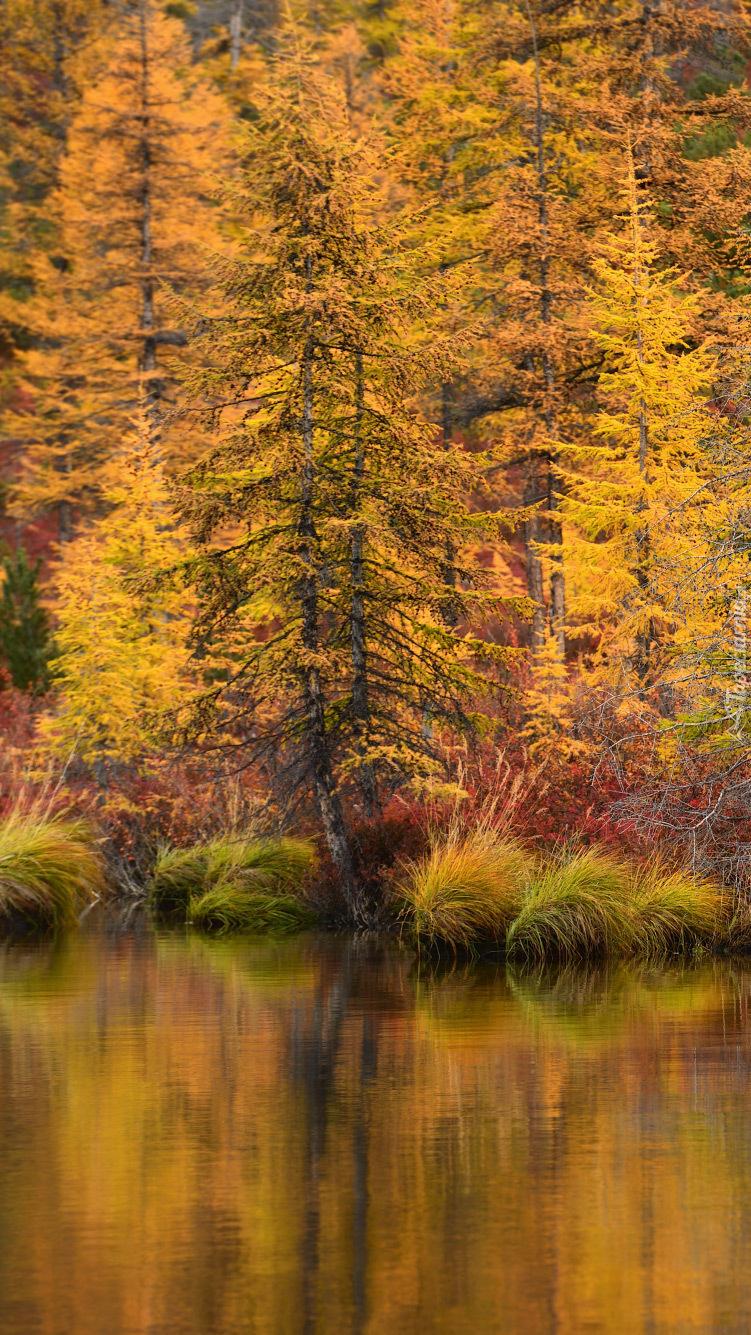 Jesienne drzewa nad jeziorem Jack London
