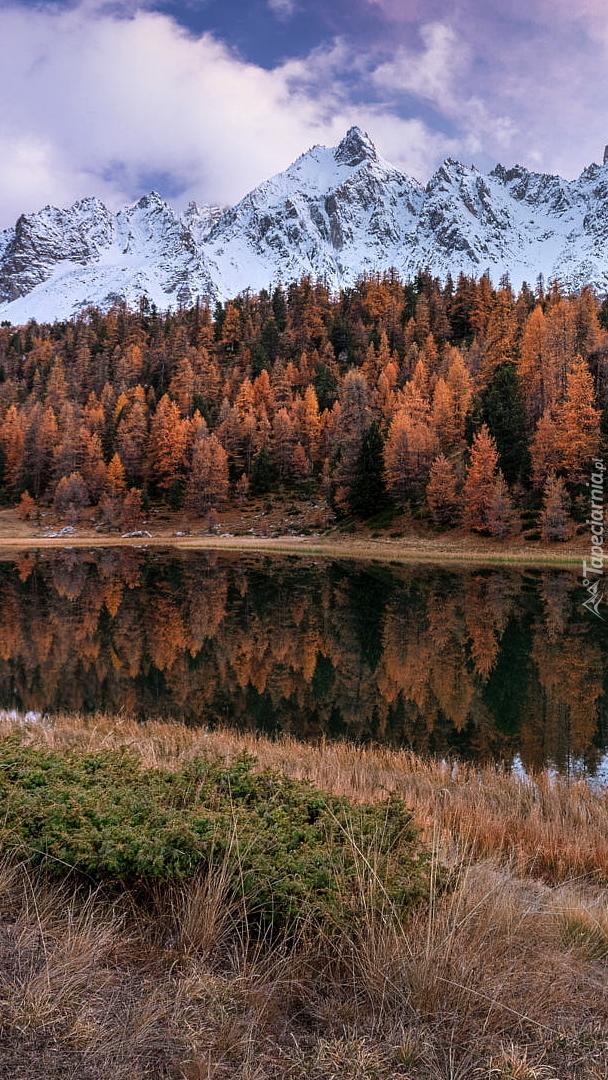 Jesienne drzewa nad jeziorem Lac Miroir