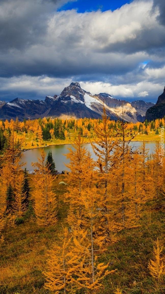 Jesienne drzewa nad jeziorem w górach
