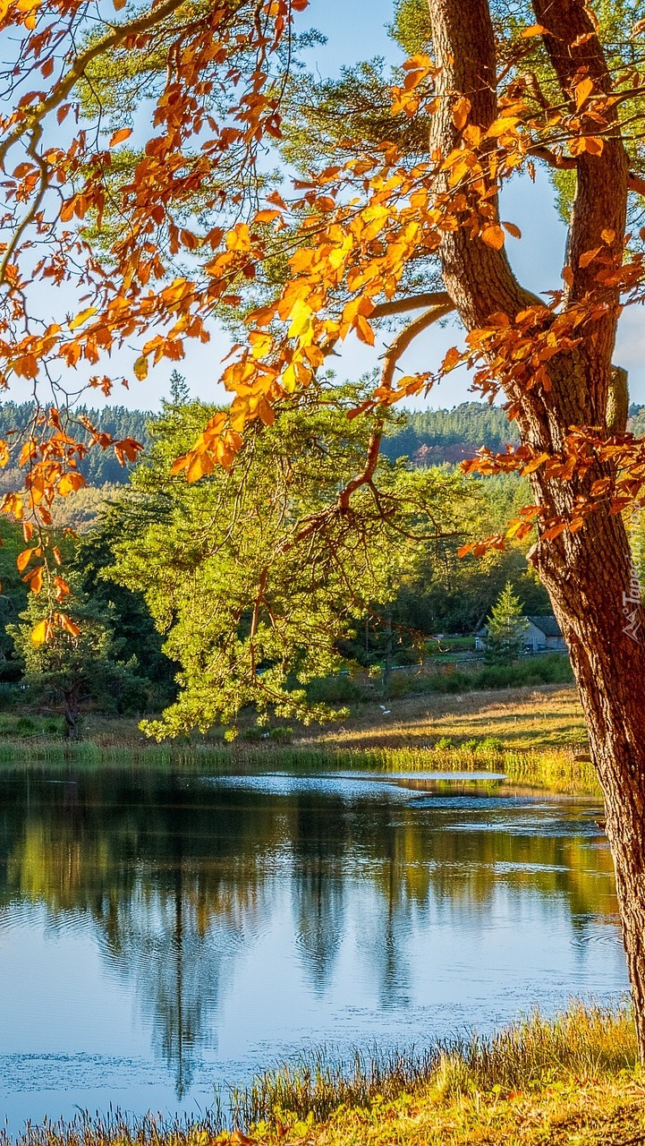 Jesienne drzewa nad jeziorem w słońcu