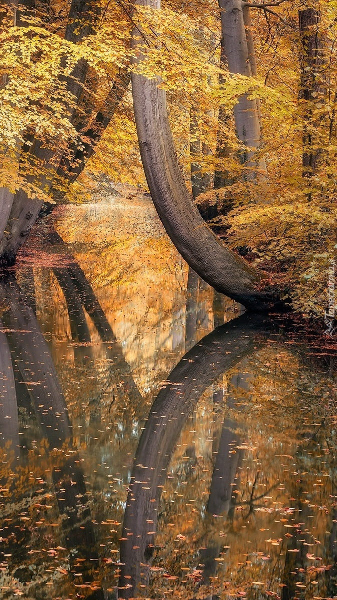 Jesienne drzewa nad rzeką