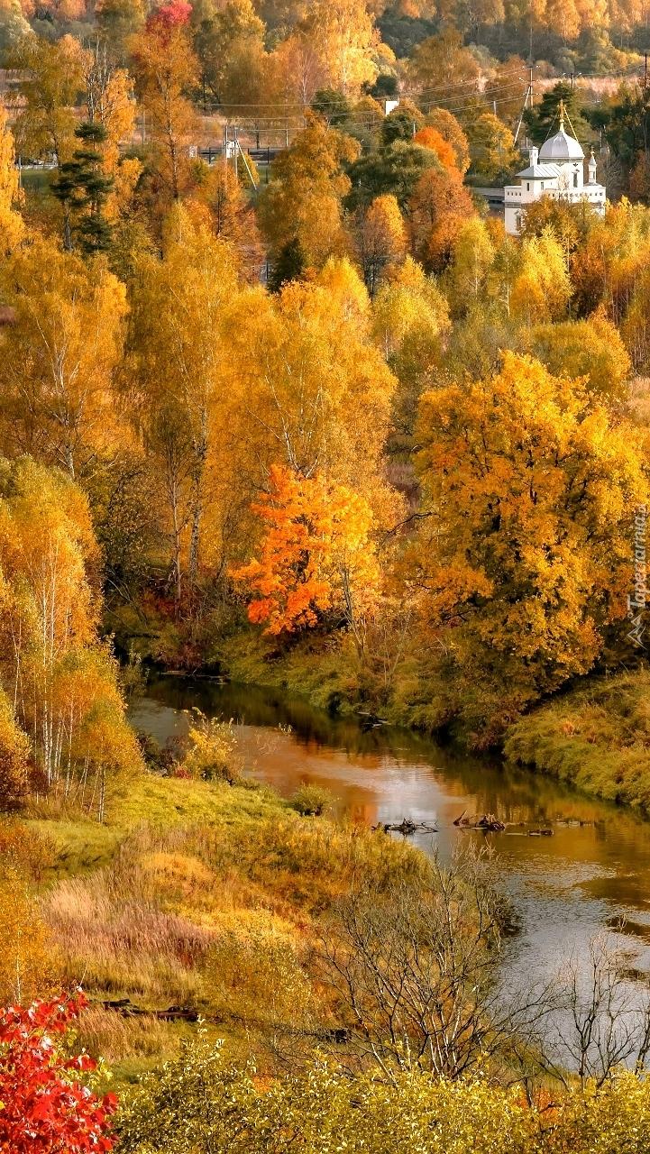 Jesienne drzewa nad rzeką Istra