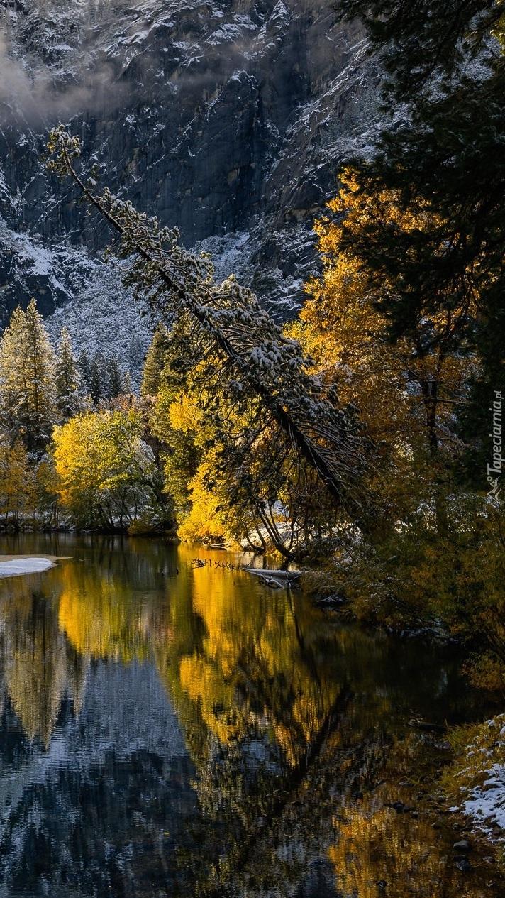 Jesienne drzewa nad rzeką Merced River