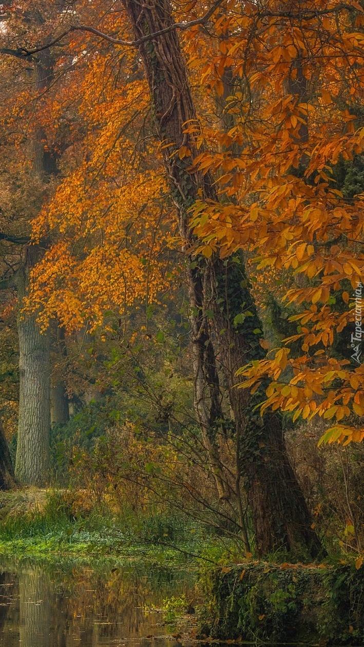 Jesienne drzewa nad rzeką w parku