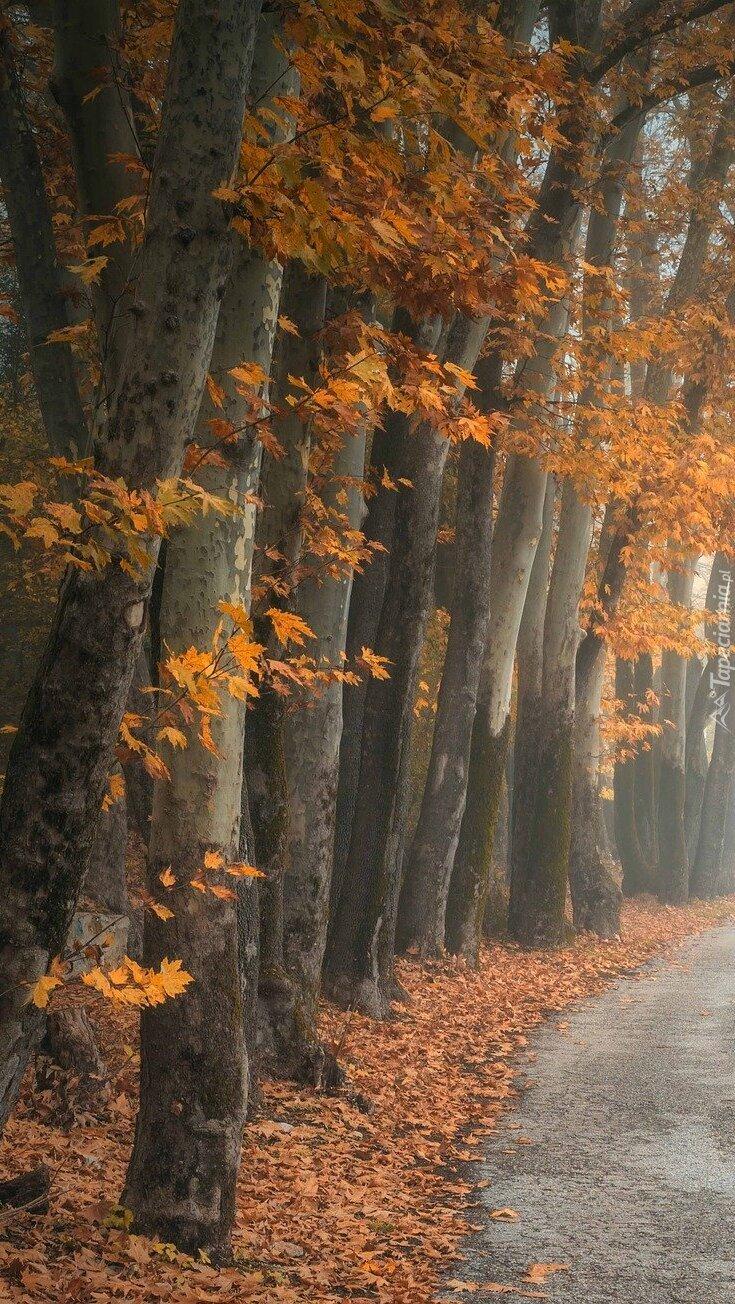 Jesienne drzewa przy drodze