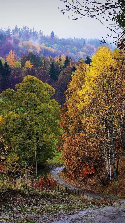 Jesienne drzewa przy drodze na wzgórzu