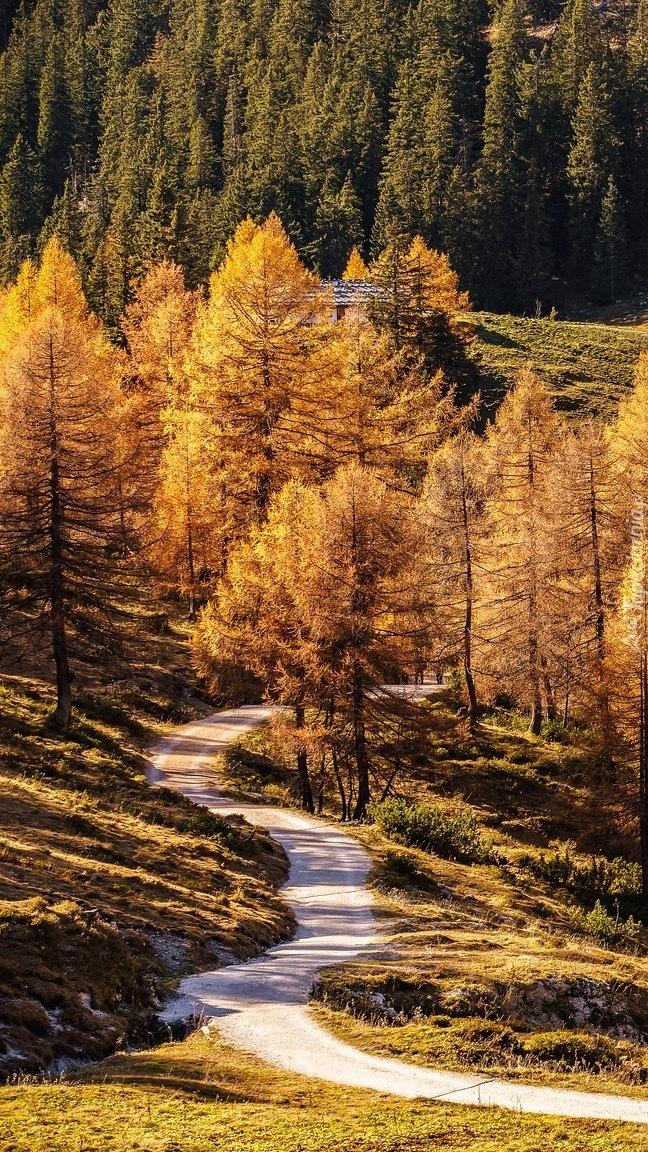 Jesienne drzewa przy drodze w górach