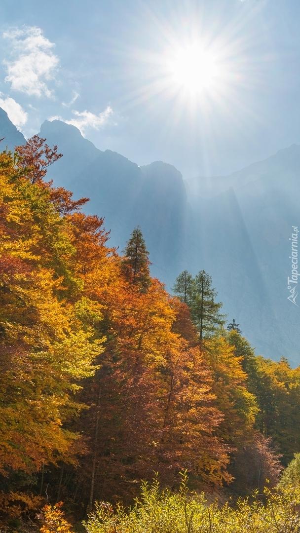 Jesienne drzewa w dolinie Vrata