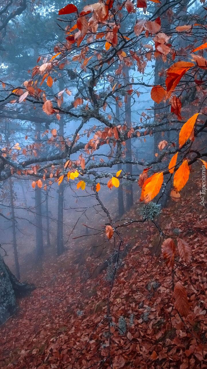 Jesienne drzewa w lesie