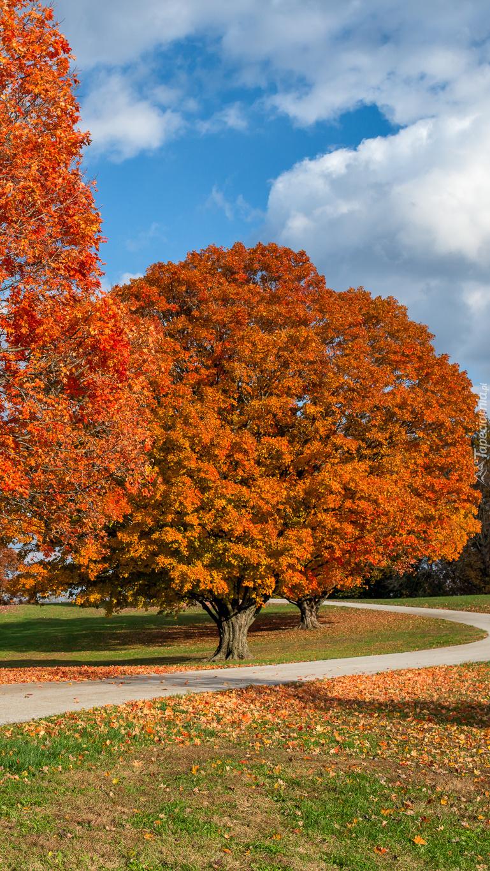 Jesienne drzewa w parku