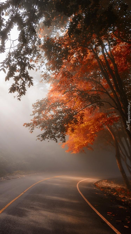 Jesienne drzewa we mgle przy drodze