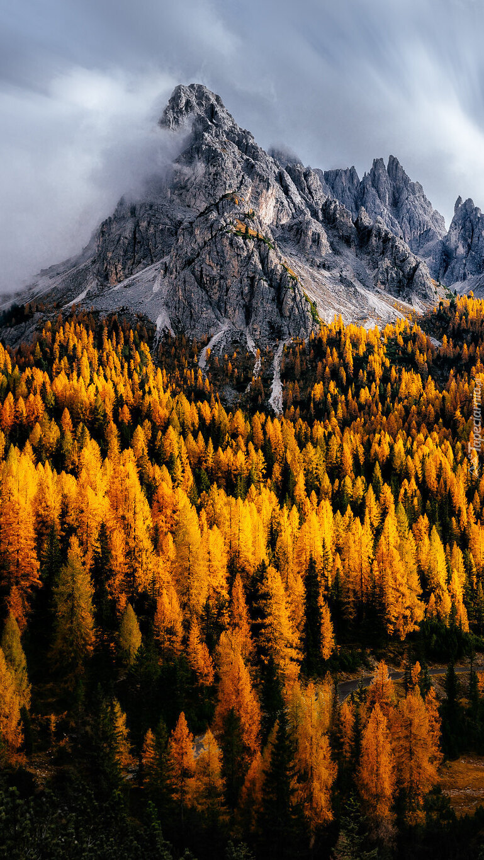 Jesienne drzewa we włoskich Dolomitach