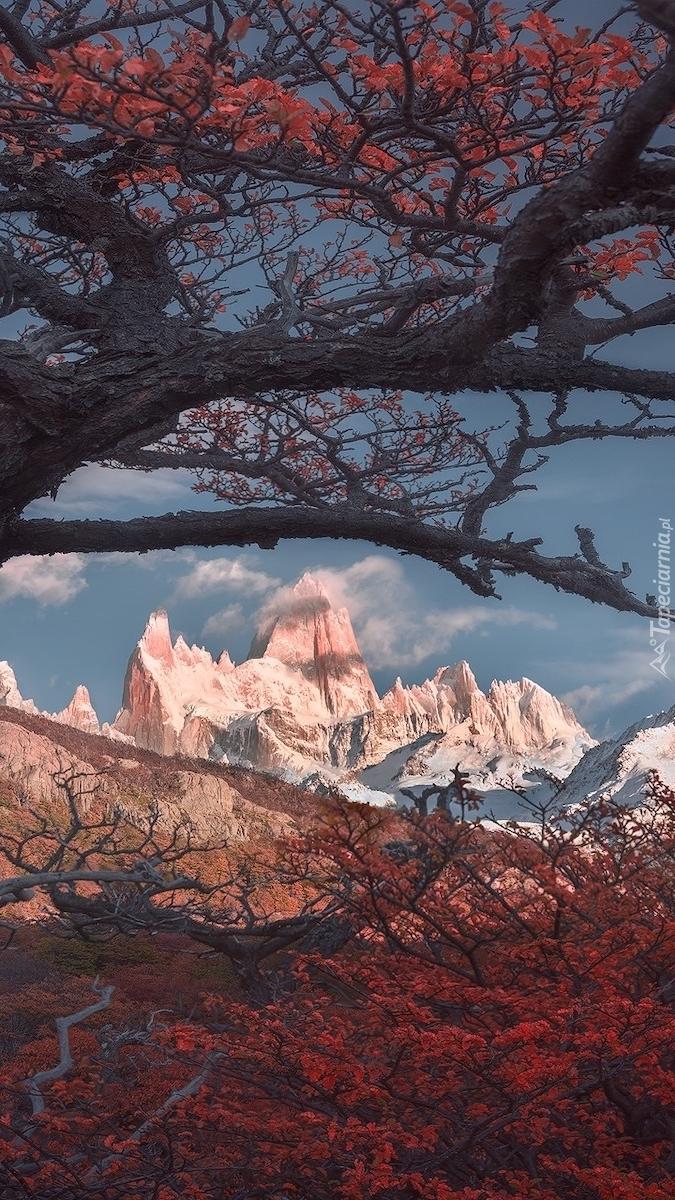 Jesienne drzewo na tle szczytu Fitz Roy
