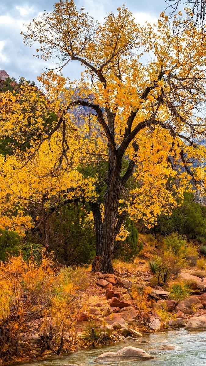 Jesienne drzewo nad rzeką