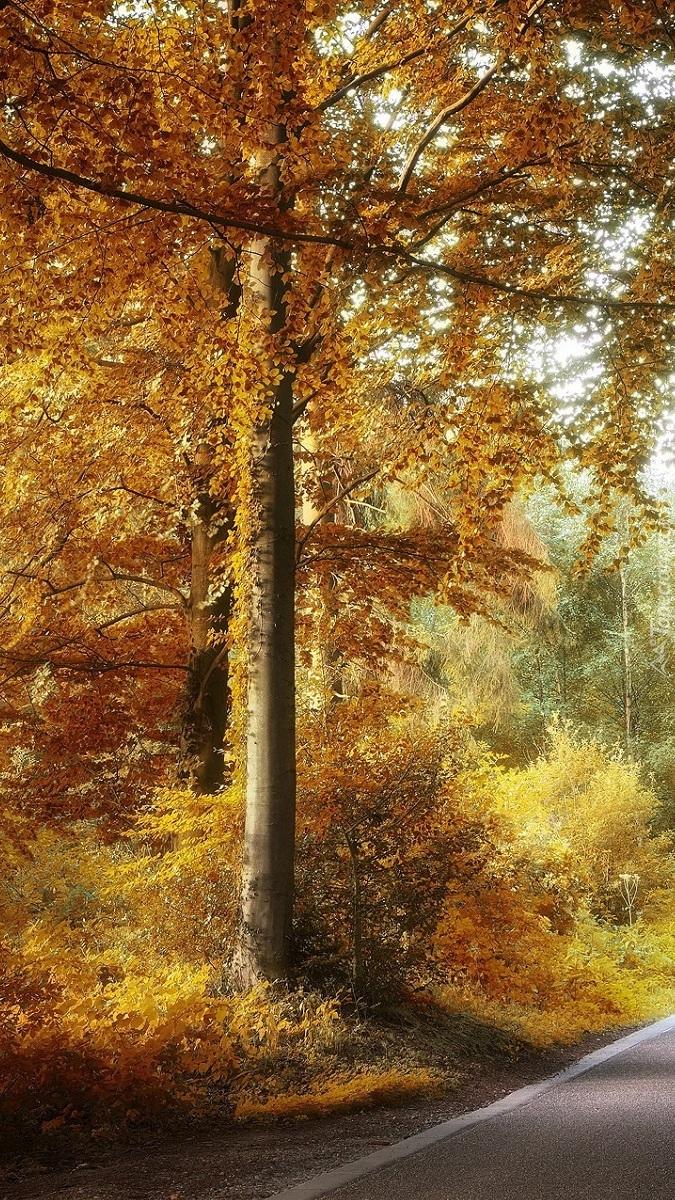Jesienne drzewo przy drodze