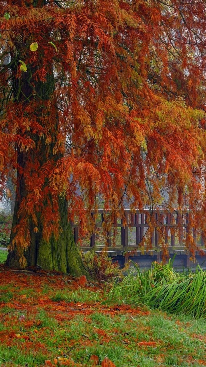 Jesienne drzewo przy moście