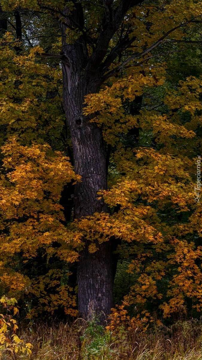 Jesienne drzewo w lesie