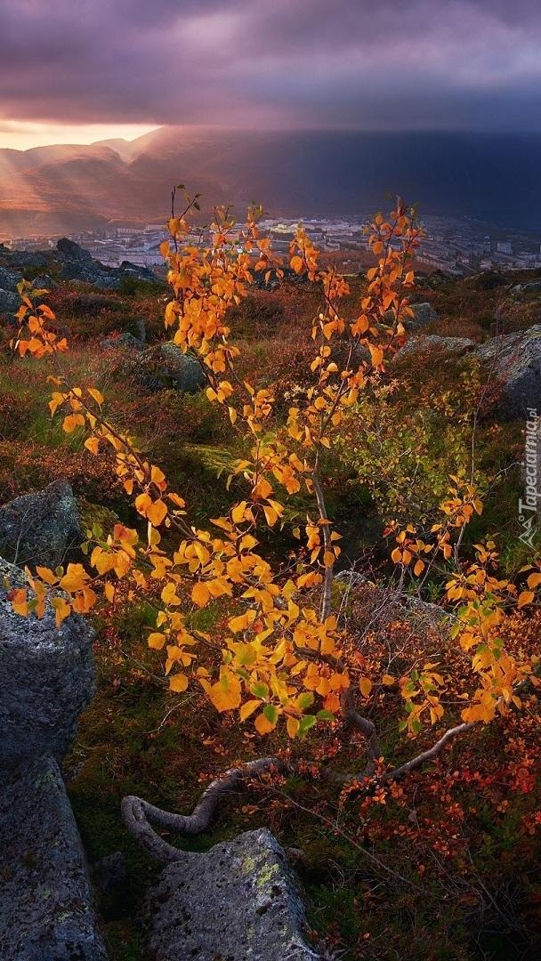 Jesienne krzewy na skałach