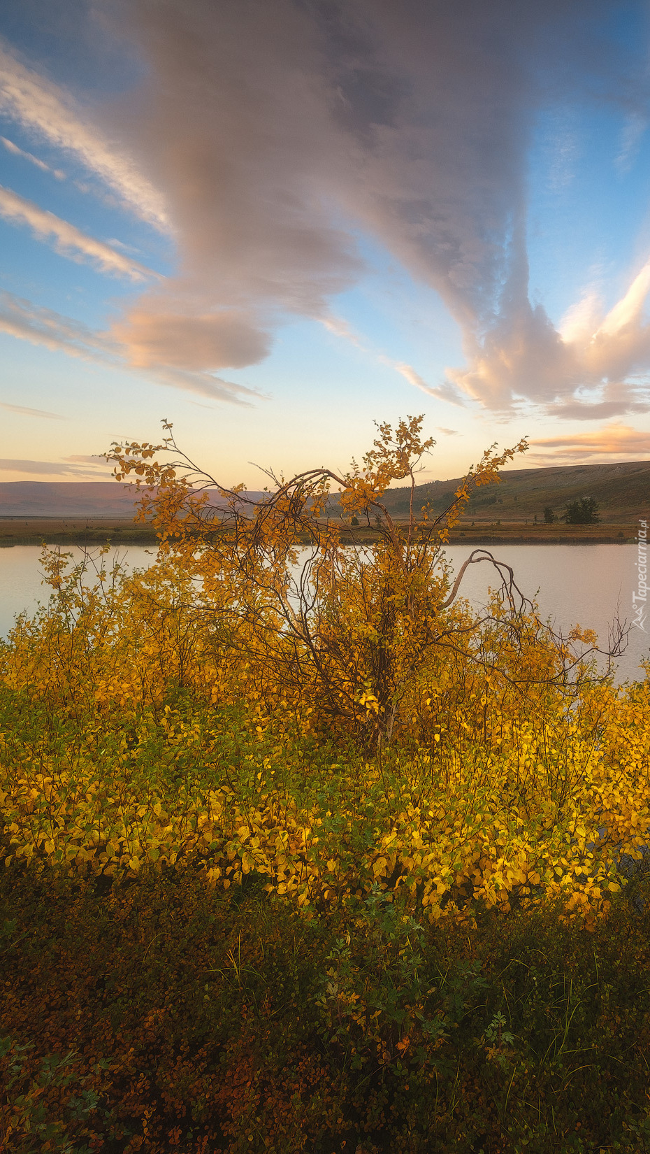 Jesienne krzewy nad jeziorem
