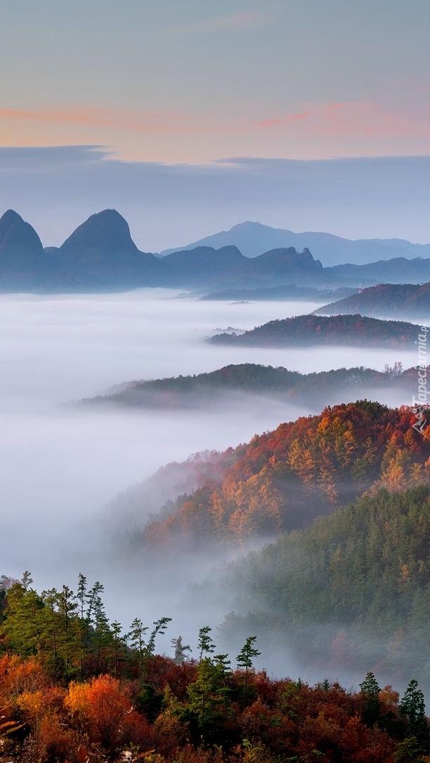 Jesienne lasy we mgle