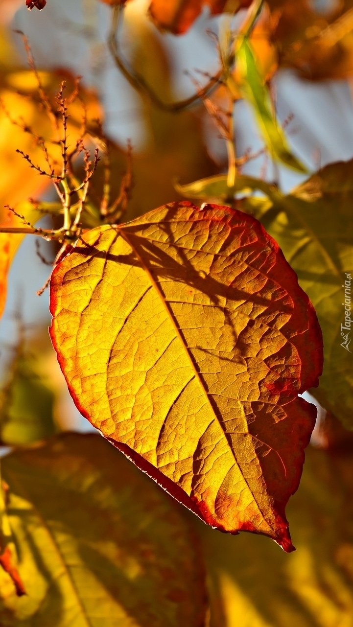 Jesienne liście na gałązce