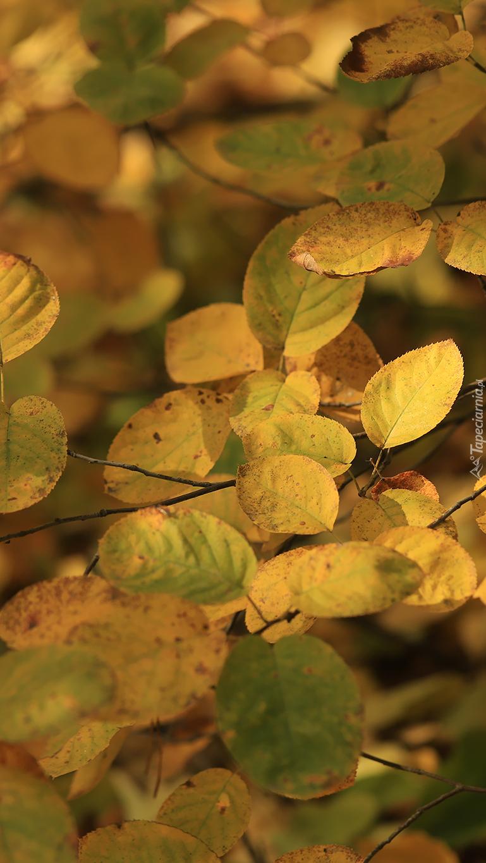 Jesienne liście na gałązkach