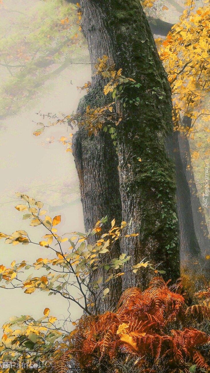 Jesienne paprocie pod drzewem