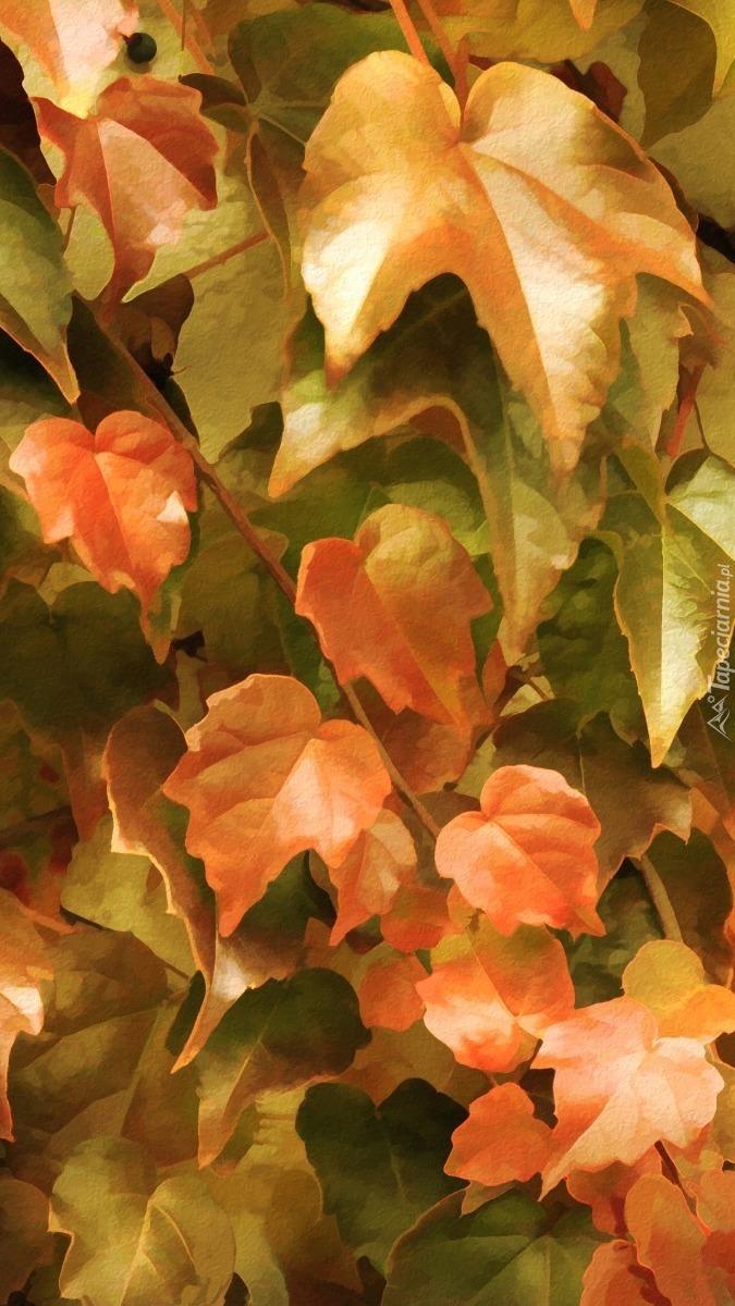 Jesienny bluszcz