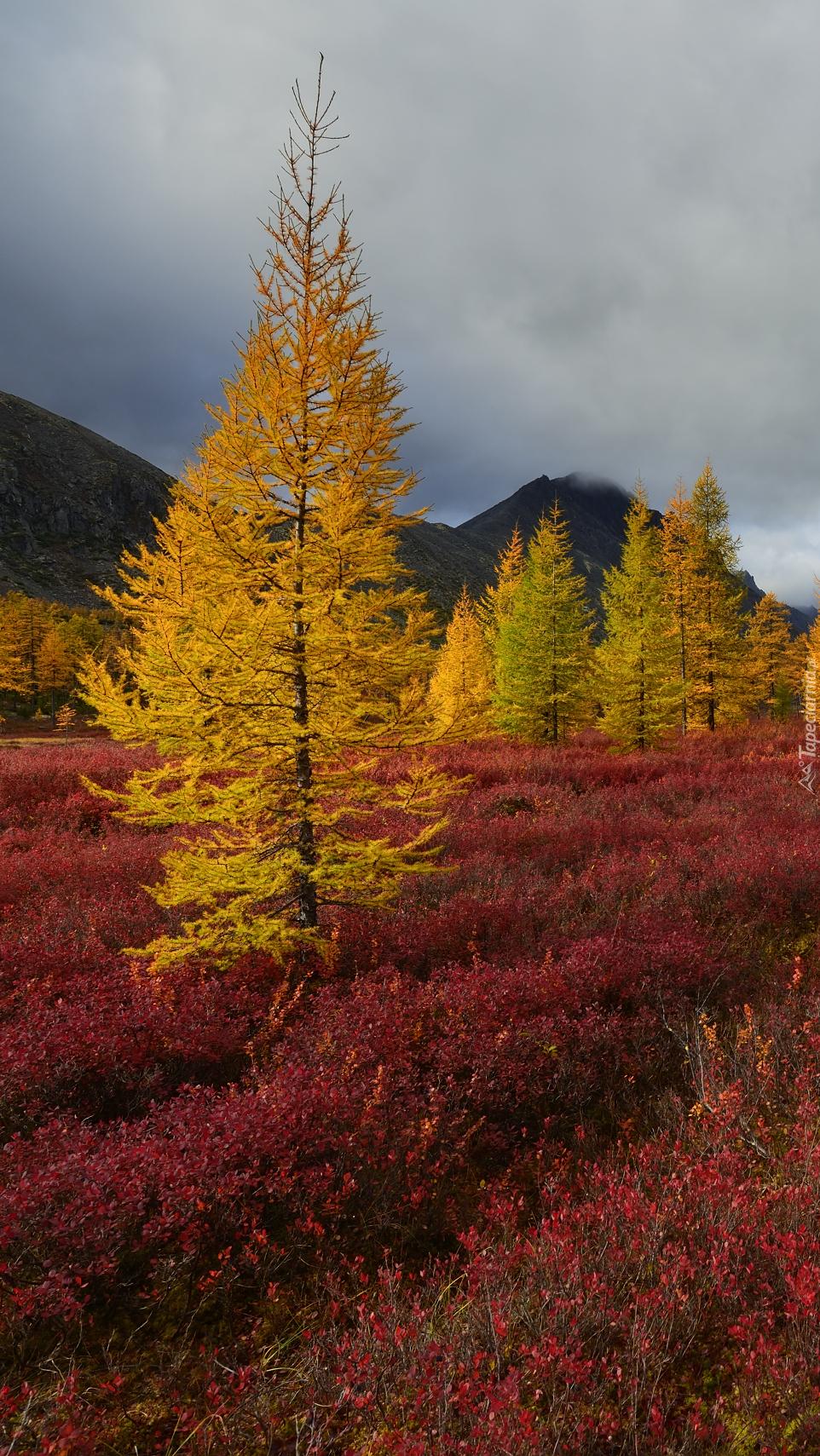 Jesienny górski krajobraz