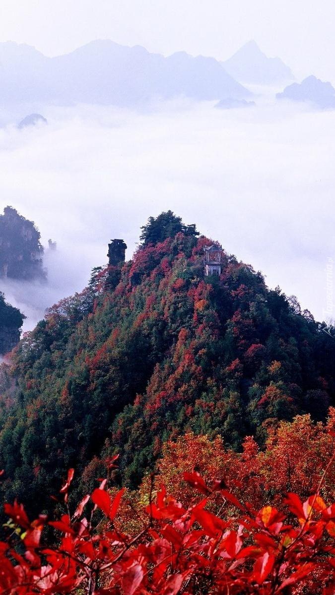 Jesienny las na szczycie góry