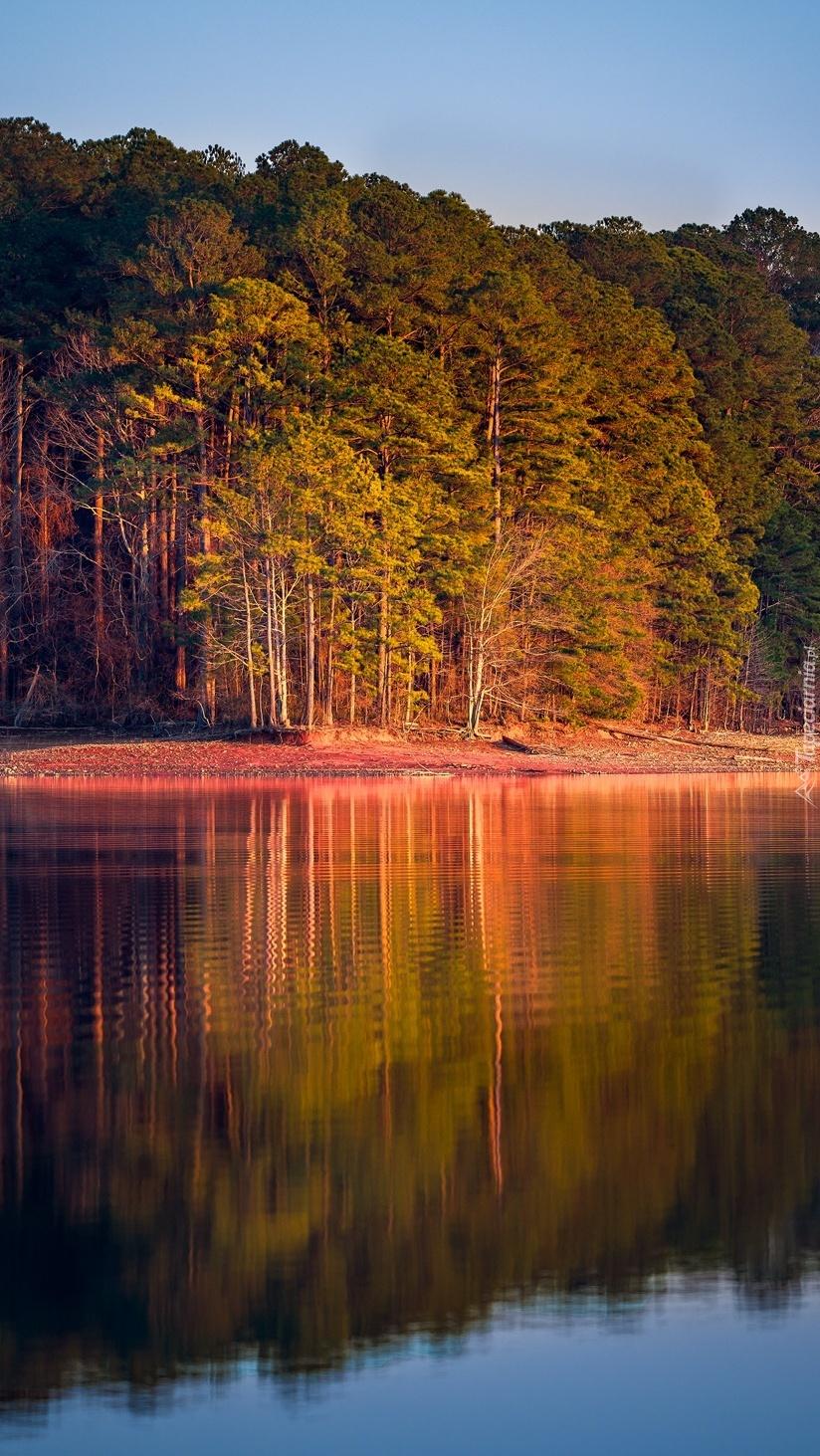 Jesienny las nad jeziorem