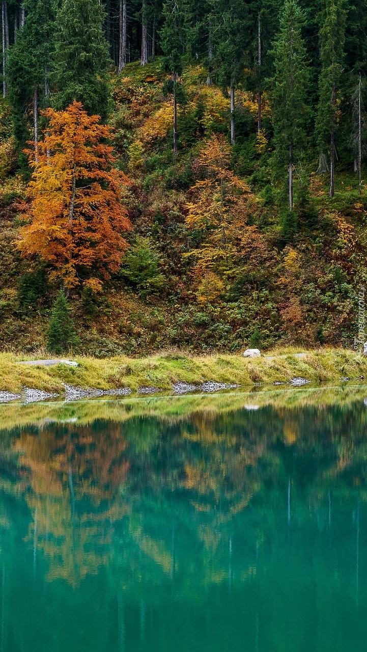 Jesienny las nad jeziorem Herzsee w Austrii