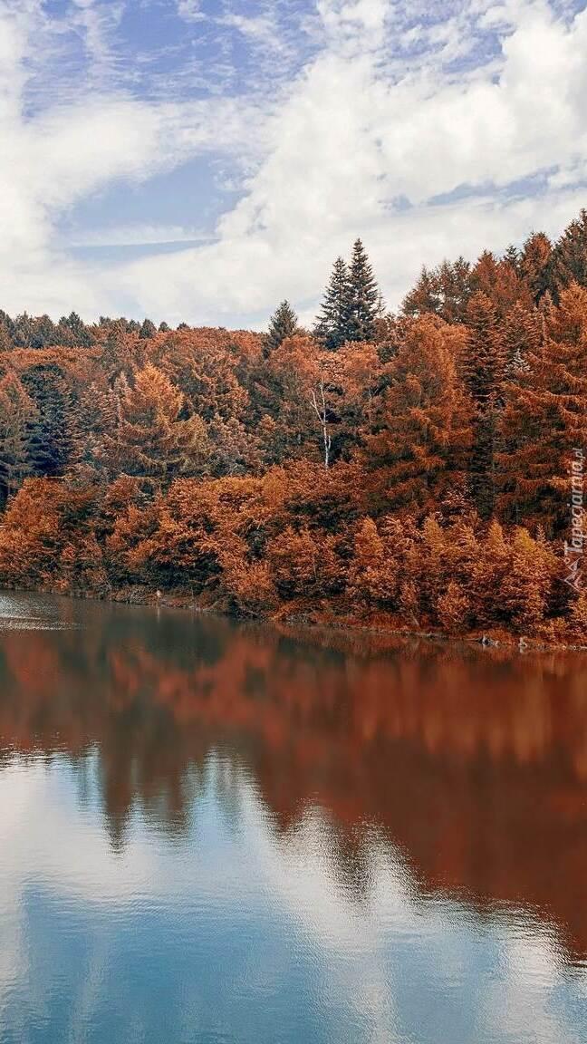 Jesienny las nad rzeką