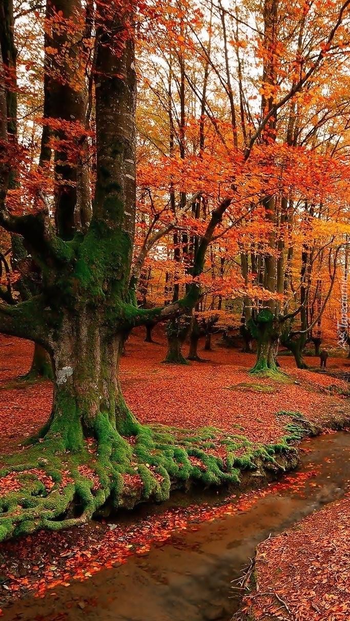 Jesienny las ze strumykiem w Hiszpanii