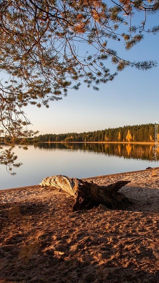 Jezioro i las w blasku słońca