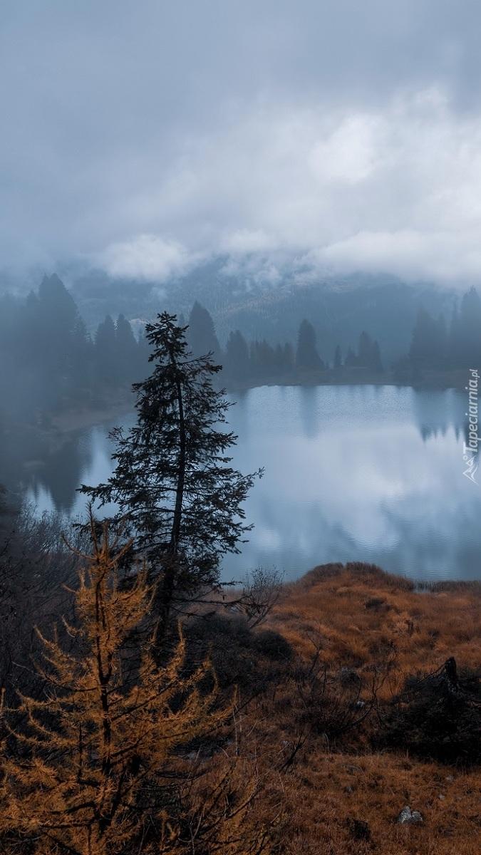 Jezioro i las we mgle