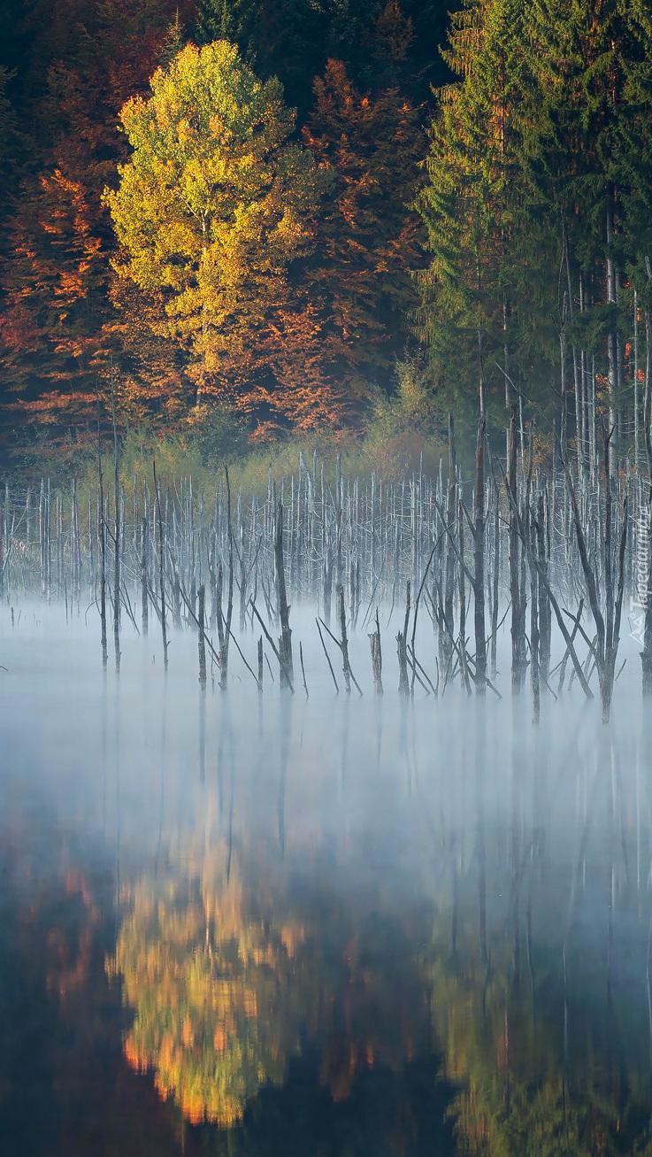 Jezioro Lacul Cuejdel