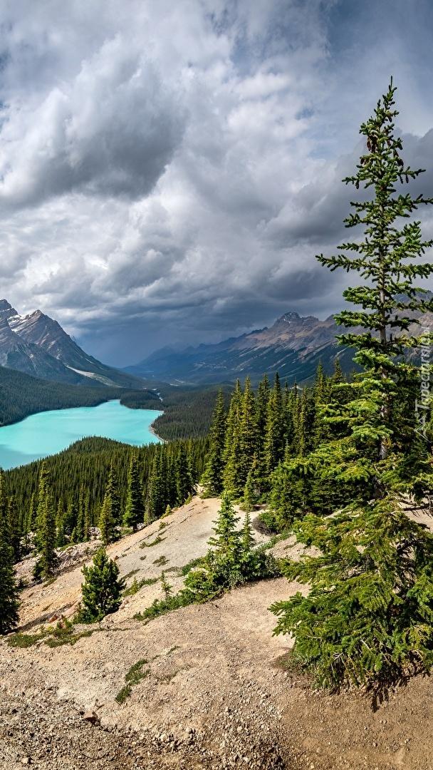 Jezioro Peyto w Kanadzie