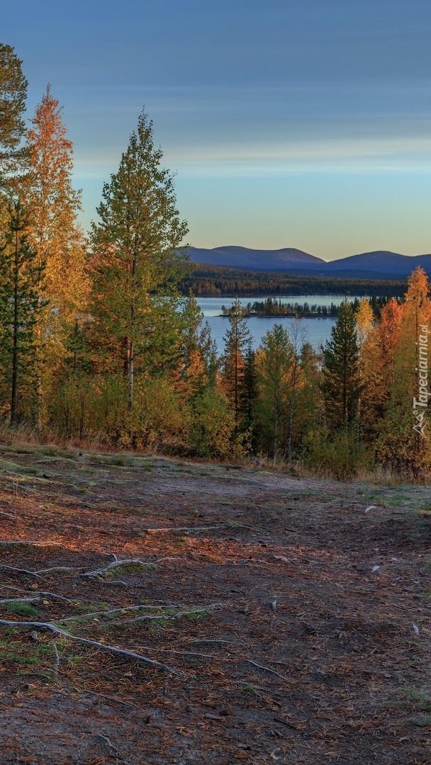 Jezioro przysłonięte drzewami
