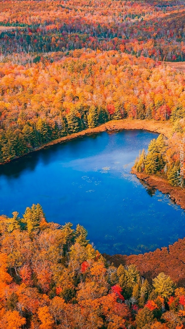 Jezioro w kształcie serca wśród jesiennych lasów