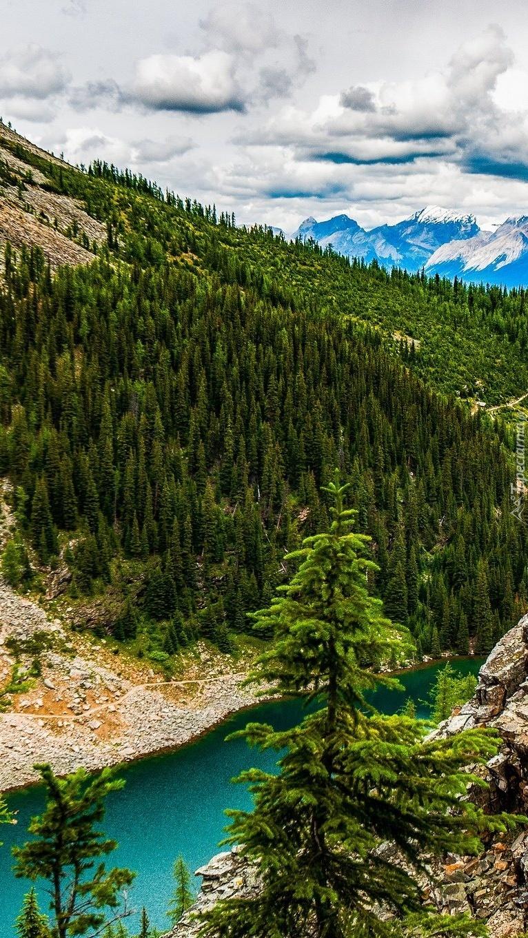 Jezioro w środku lasu